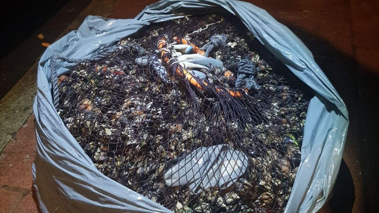 El Seprona incauta dos colmillos de elefante y un copón de marfil en Cambre.Imagen de archivo de percebes incautados en una operación contra el furtivismo en la costa gallega