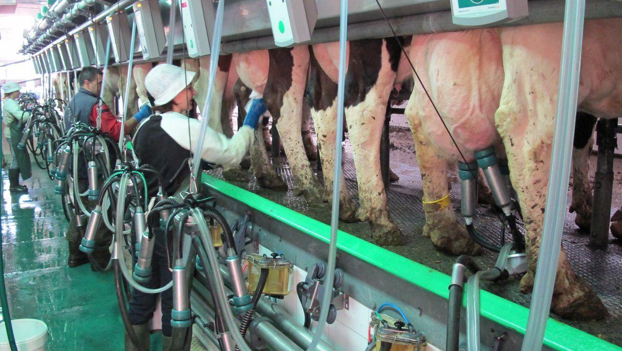Isabel Ramos fue esta mañana a trabajar, como todos los días, a una granja de Mazaricos para realizar el ordeño