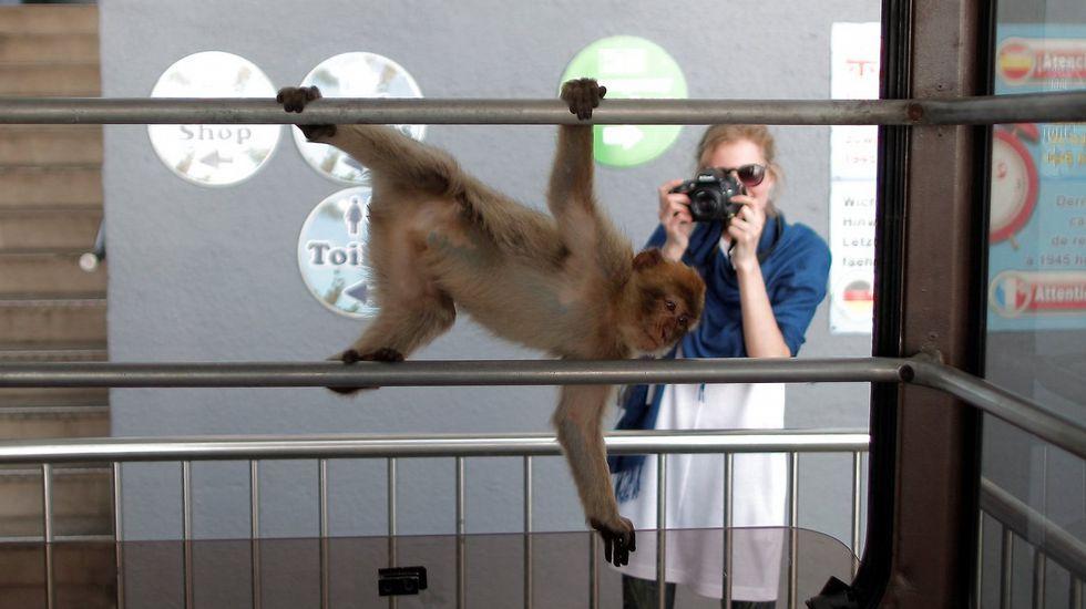 Una turista fotografía a uno de los monos que hay en Gibraltar