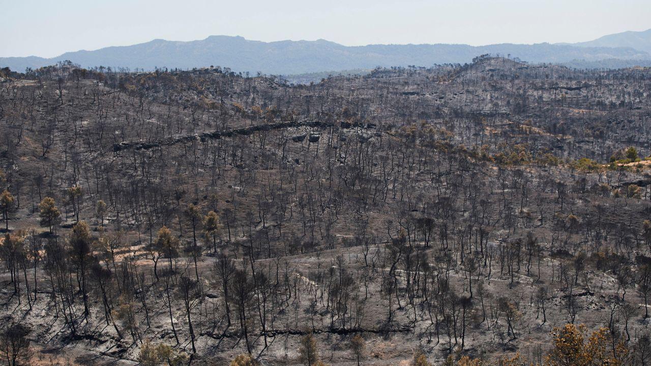Vista de parte del terreno calcinado por el incendio forestal de Tarragona