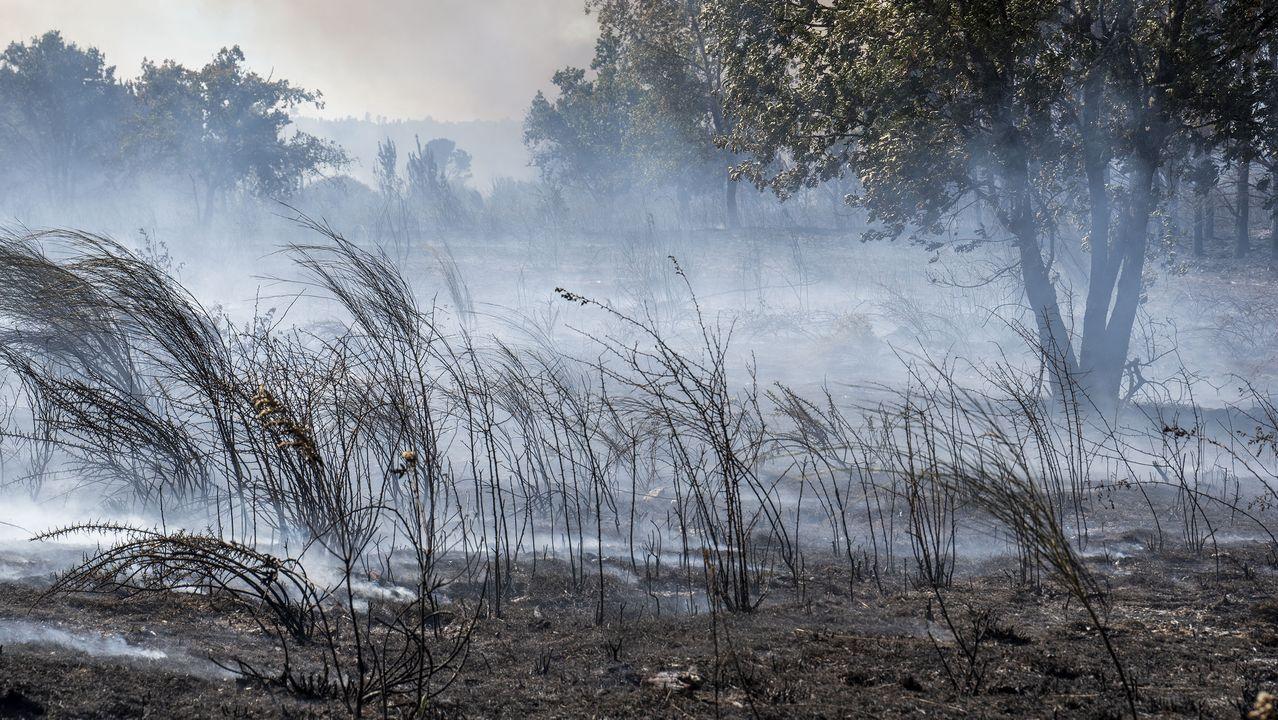 El fuego afecta a zonas de monte bajo y de arbolado. Las primeras estimaciones de la Consellería de Medio Rural indican que la superficie afectada cubre unas noventa hectáreas