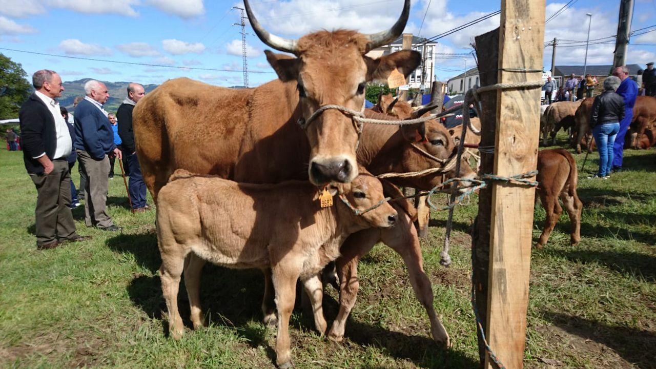 Cervantes recuperó la histórica feria de ganado.Puesto dedicado a la gastronomía lucense en la Vuelta del año pasado
