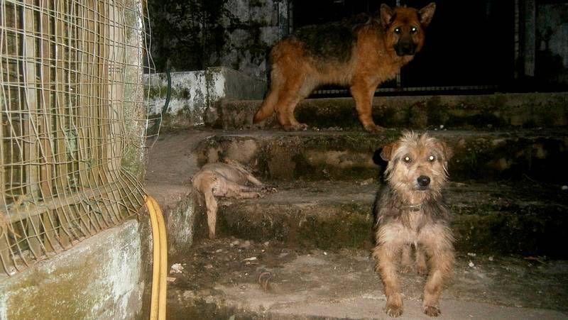 Dentro de la perrera ilegal de Gondomar