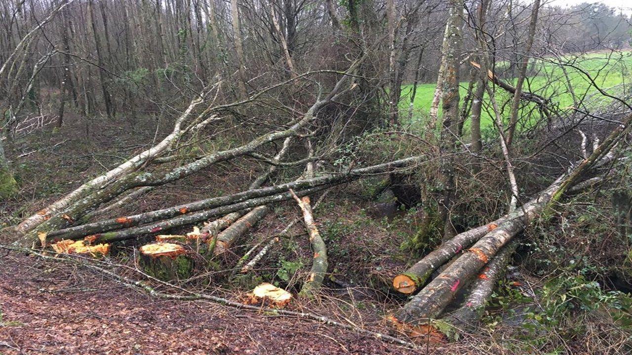 En la carretera de Friol a Palas de Rei se  prevé ampliar la calzada a ocho metros, innecesariamente porque no hay tráfico, cortando los árboles de ribera de la Reserva de la Biosfera.