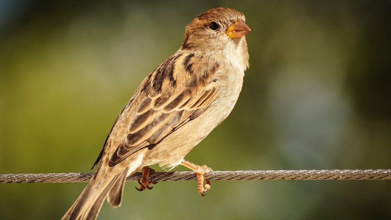 El vertedero de Zaldibar, a vista de pájaro.Un gorrión descansa posado sobre un cable