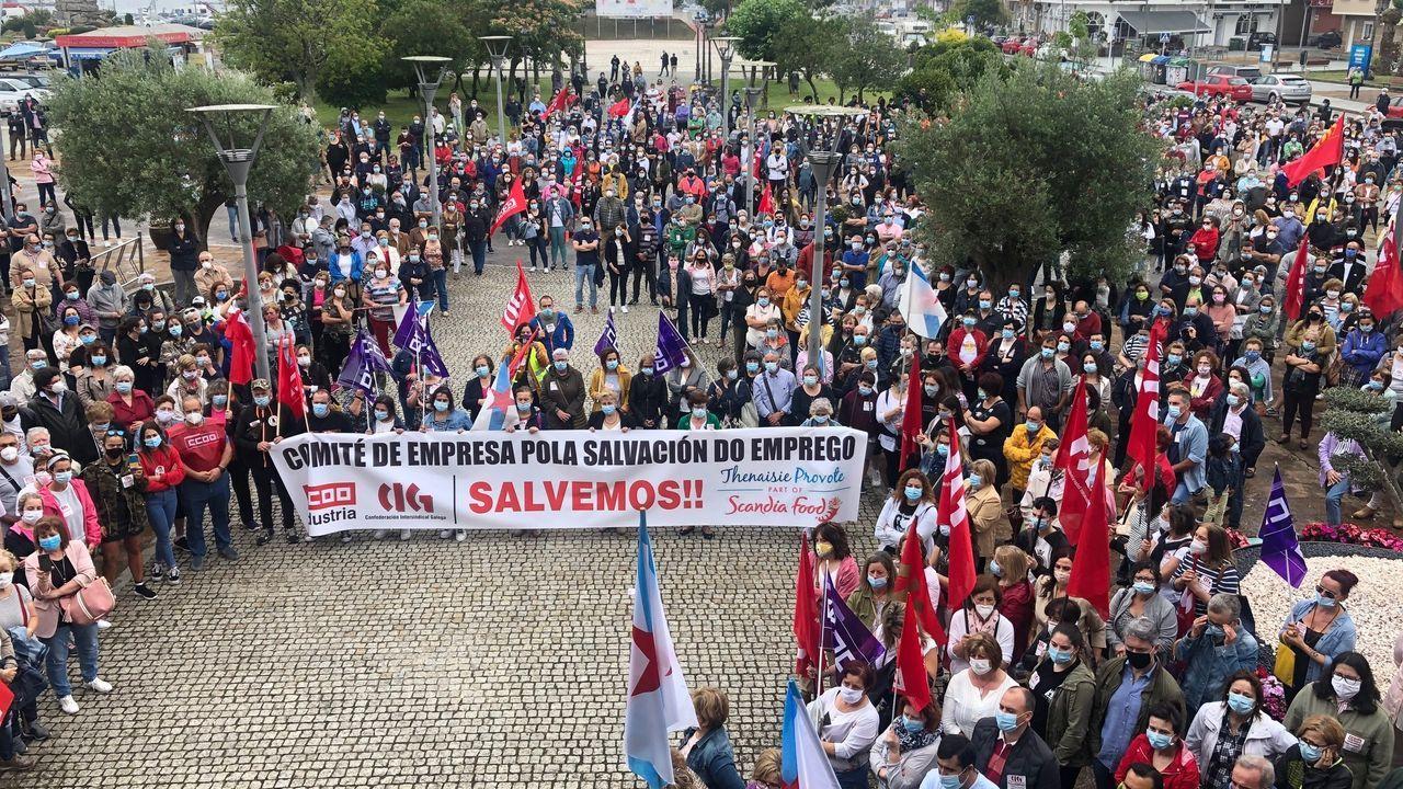 Vaca de raza cachena en un explotación del entorno de Santiago