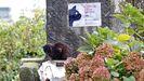 Colonia de gatos callejeros en la zona de Campo do Boi, en Pontevedra
