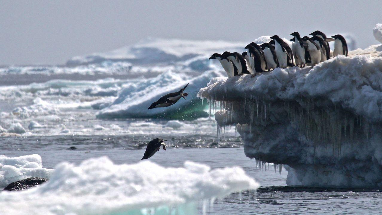 Y el tiburón Gastón salió de caza.El deshielo lanzará ingentes cantidades de agua dulce al océano