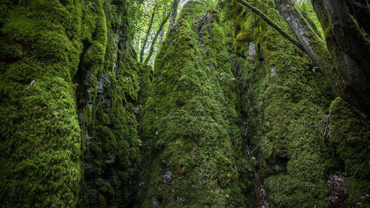 El omnipresente verde está favorecido por la humedad del valle del río Narón