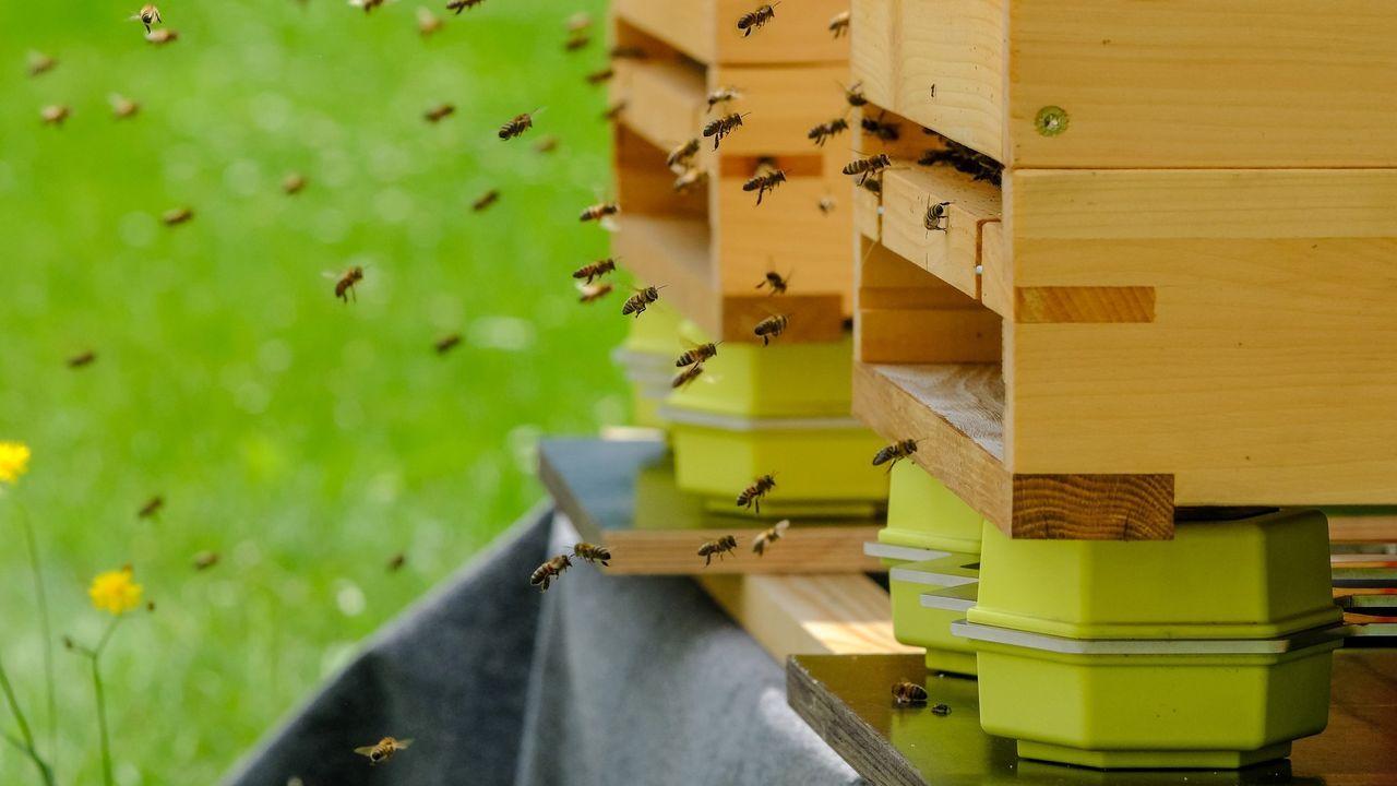 Imagen de unas colmenas que son inteligentes