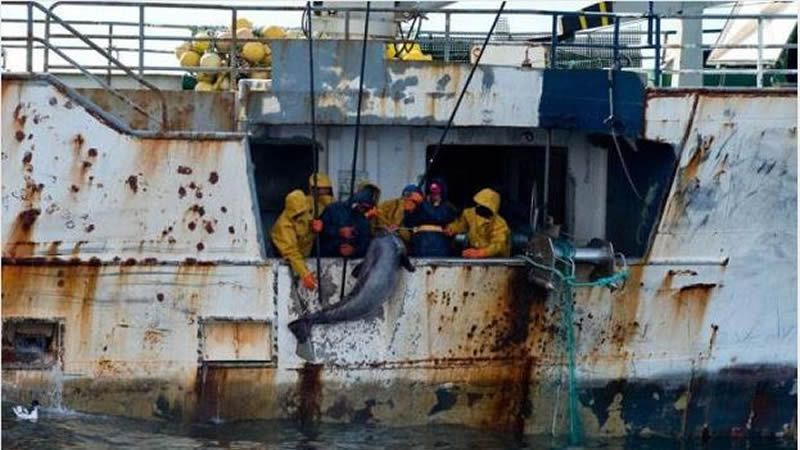 Acoso a los piratas.La patrullera grabó las supuestas actividades ilícitas de los tres barcos.