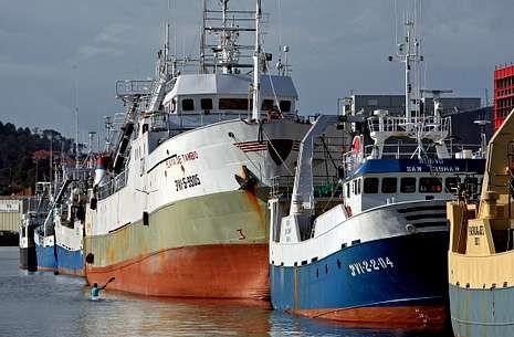 Arrastreros cefalopoderos, abarloados al muelle del puerto de Marín.