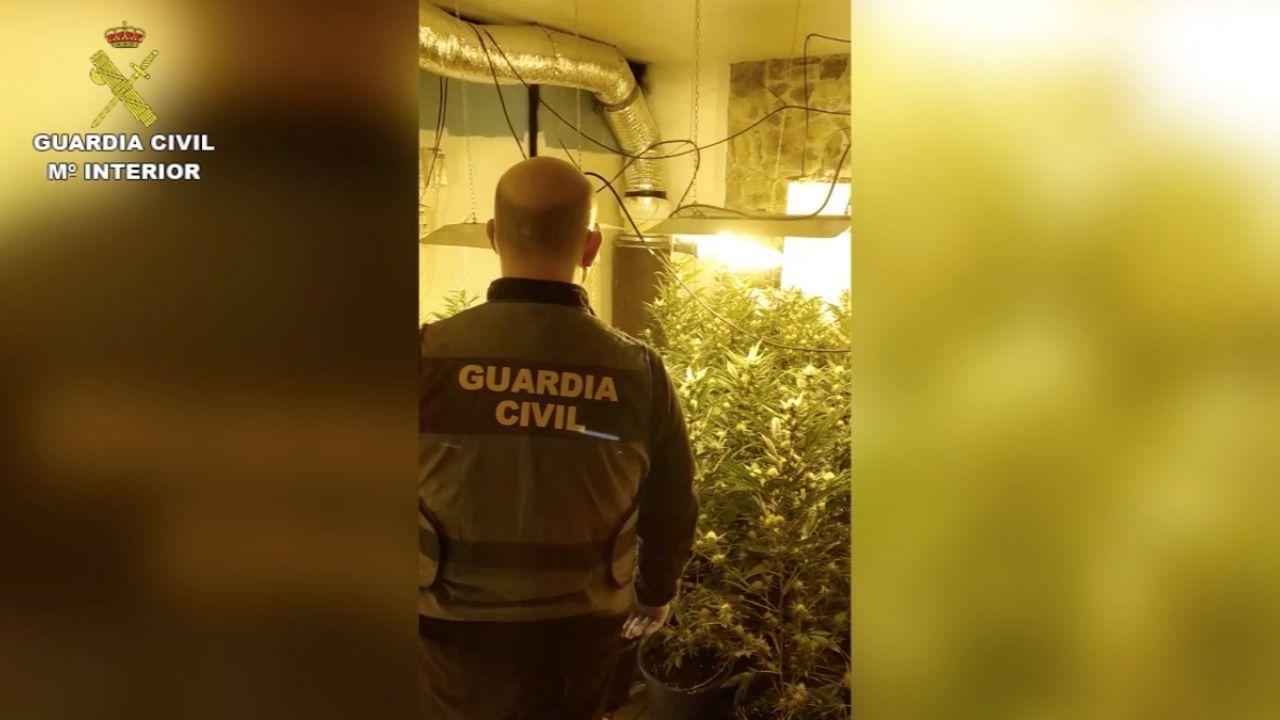 La plantación de marihuana de la operación «Sucierna»