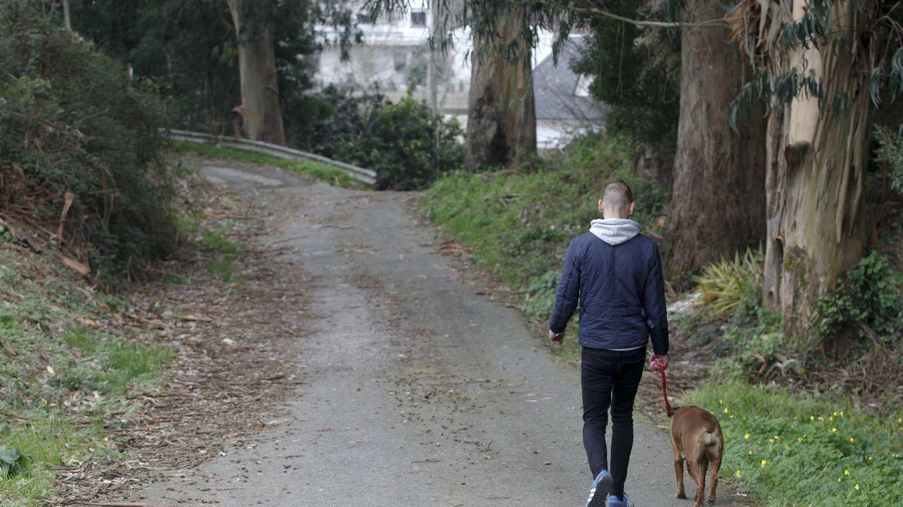 Alumnos del plan integrado de empleo de la Mancomunidade de O Salnés realizan prácticas en una empresa de la comarca.Una mujer pasea su perro protegida con mascarilla
