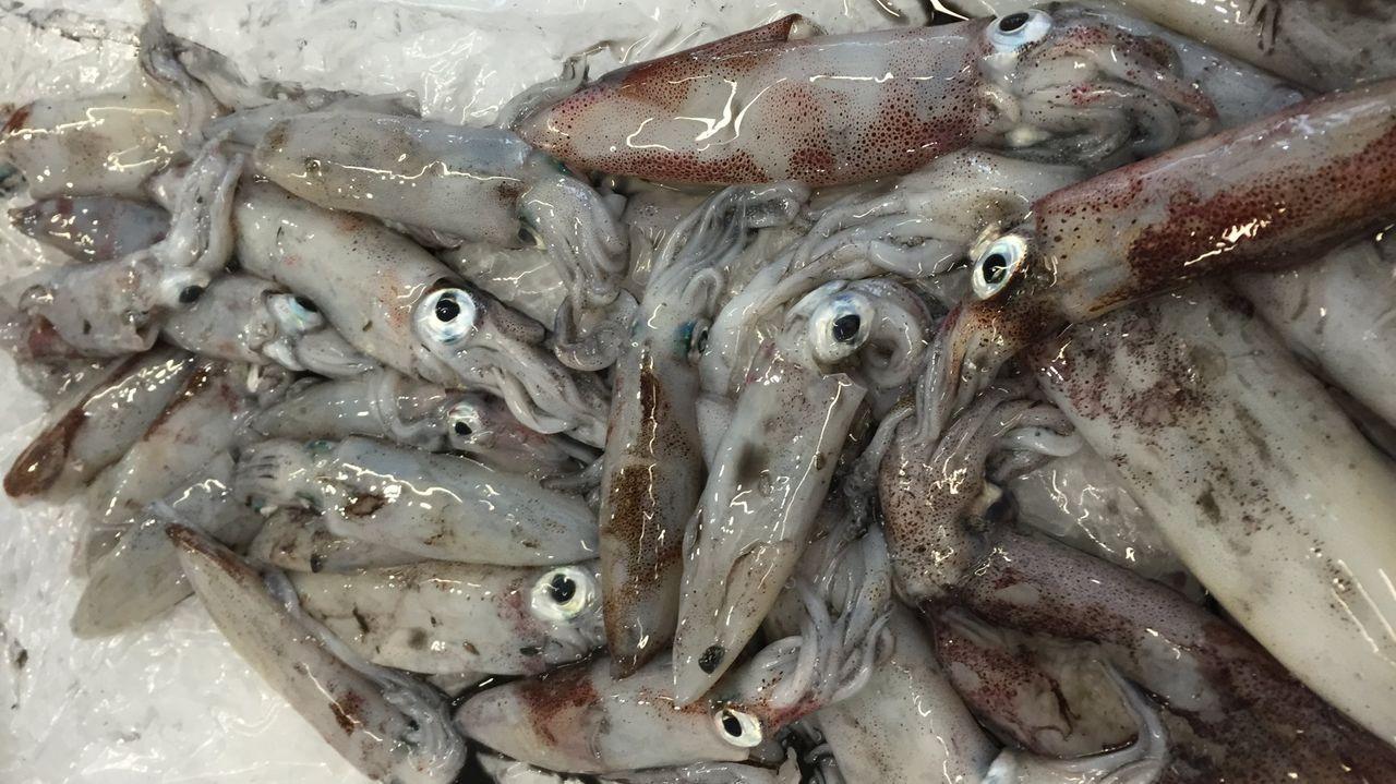 Chipirones y calamares de la ría, genuinos gallegos, en una imagen de archivo
