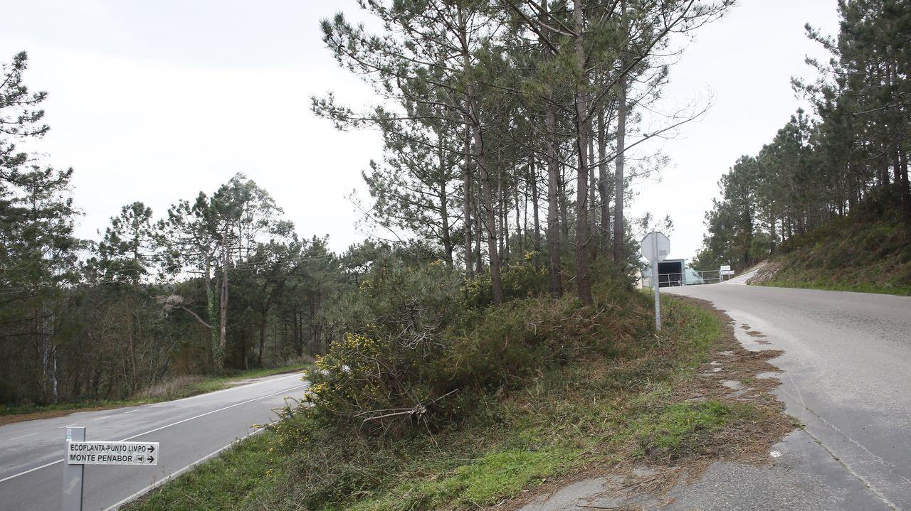 Entrevista á Conselleira de Medio Ambiente Ánxeles Vázquez.Las siete parcelas forestales del Concello están en diferentes parroquias