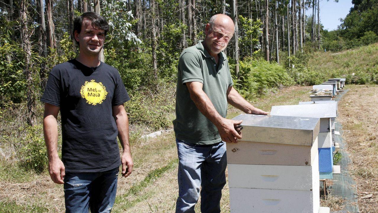 Así se retira un ejambre de abejas.Dueños de la pescadería Nasa