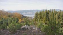Árboles a la carta para preparar Galicia ante el cambio climático