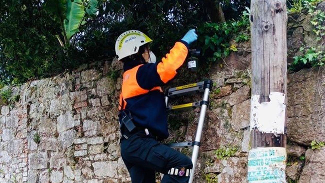 Protección Civil de Oviedo coloca trampas para la avispa asiática.