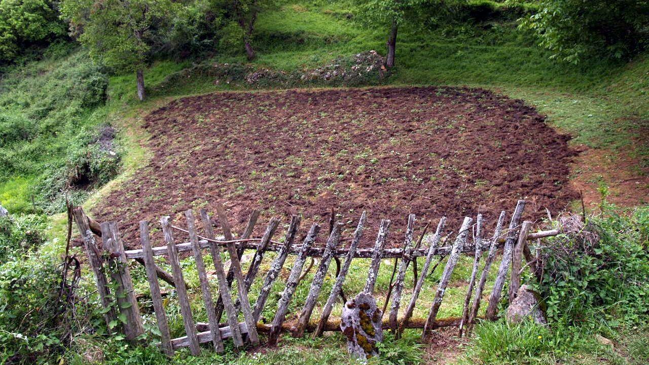 Galinsect.El minifundio es característico de Galicia