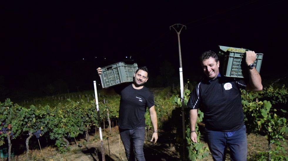 Primera vendimia nocturna en Ribeira Sacra