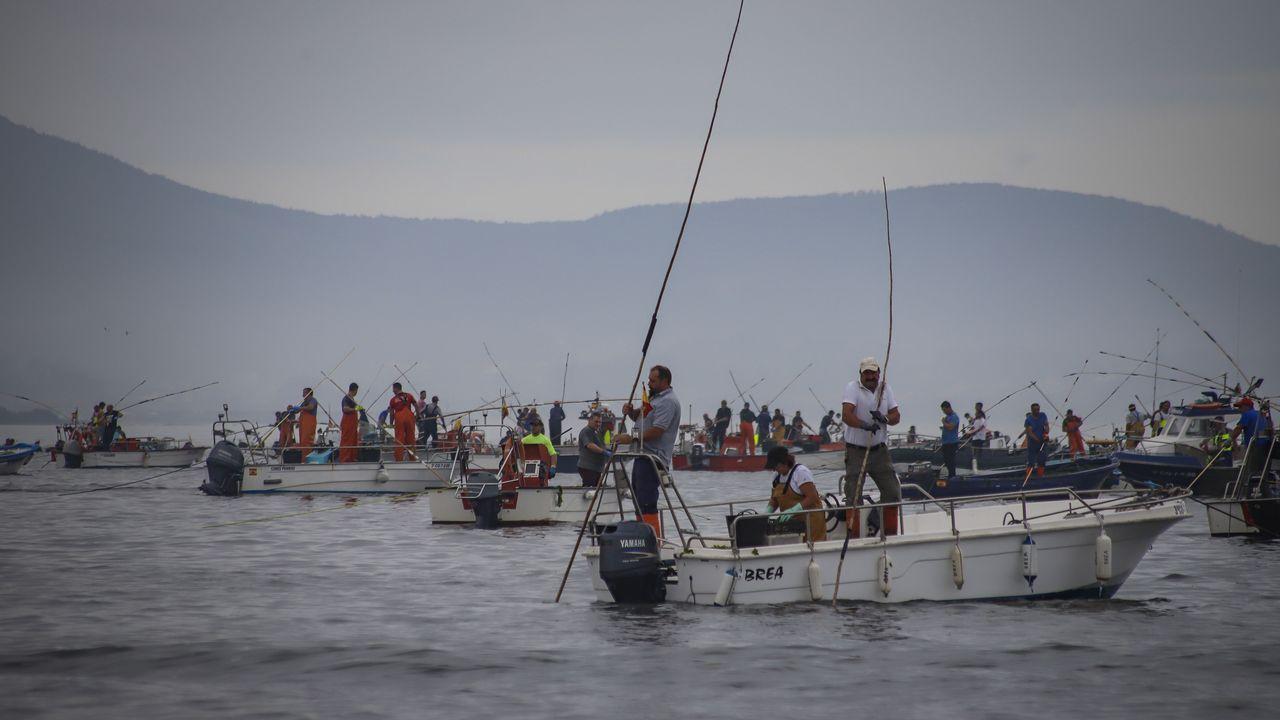 Álbum de fotos: ¡Así fue el comienzo de la campaña marisquera en Noia!