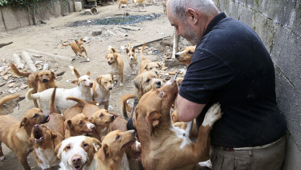 El dueño de los perros no quiere entregar ninguno más a la Policía Local