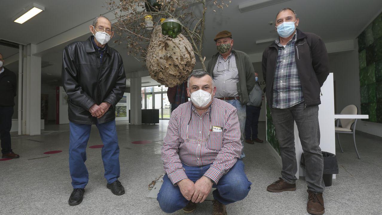 Inicio de la campaña de trampeo en A Laracha