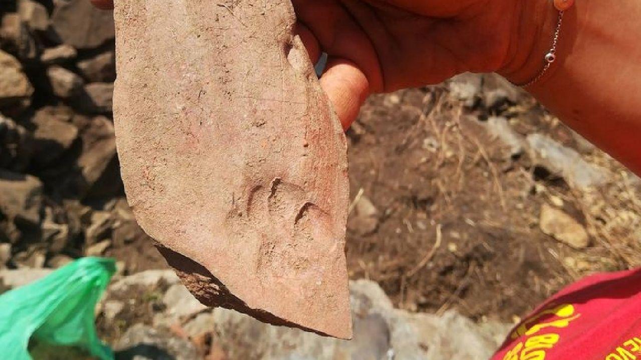 Una huella de gato es visible en uno de los numerosos fragmentos de tejas desenterrados en Os Conventos
