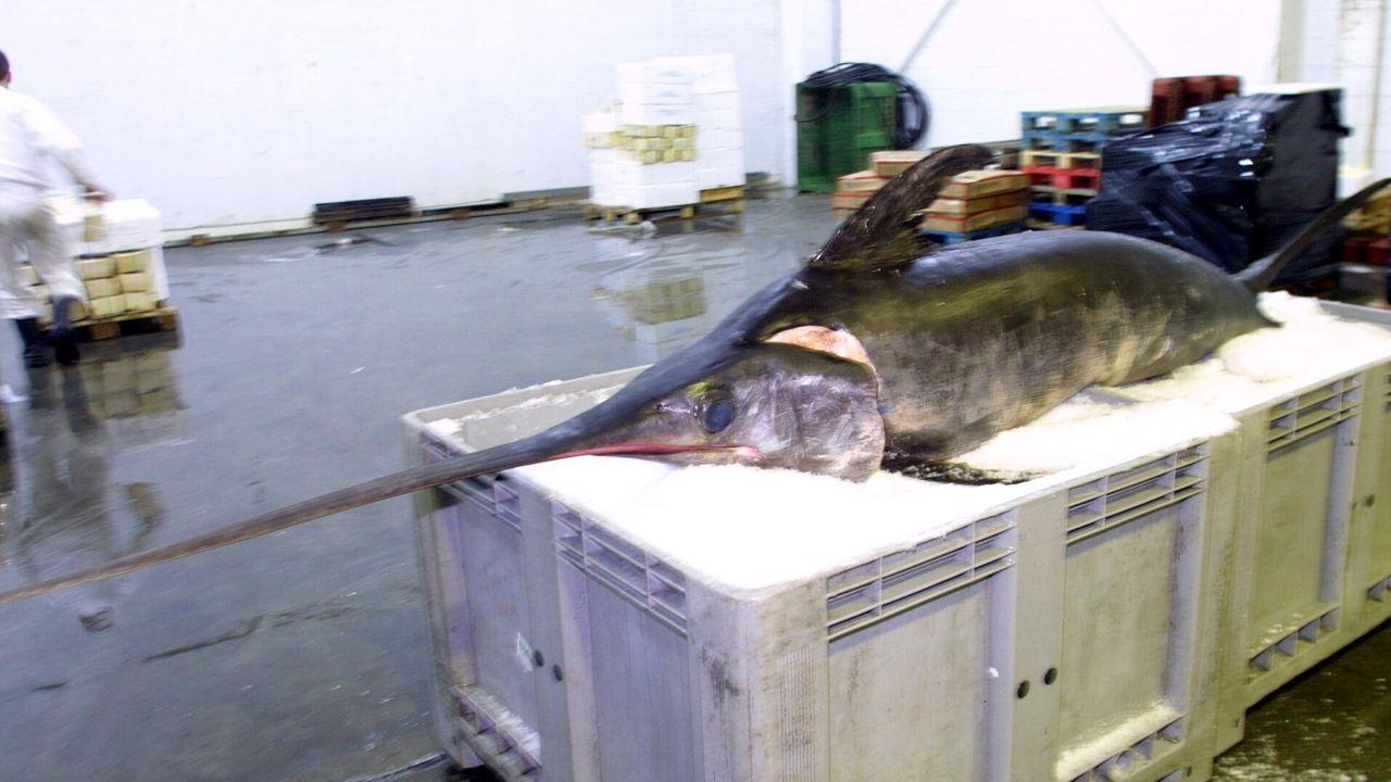 Imagen de archivo, de un pez espada en A Coruña.