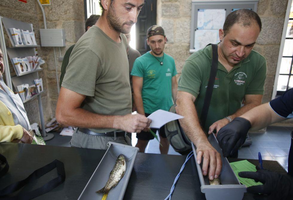 Momento de la medición de los ejemplares de truchas capturadas en el Concurso de Pesca.