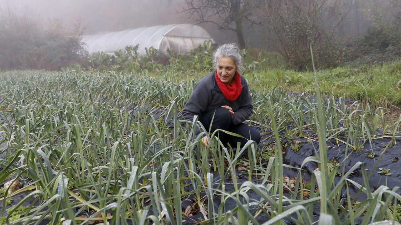 Na súa plantación de Vedra, a onde voltou Lidia Senra tras deixar a política