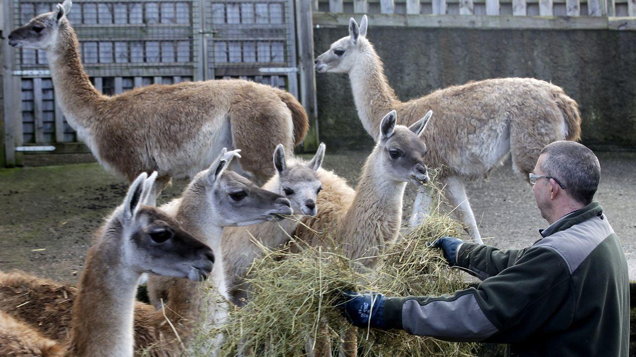 Especies sobrantes en el zoológico de Vigo.Imagen de archivo del cruce entre Subida da Madroa y la Avenida del aeropuerto