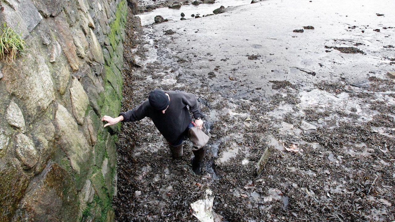 arteixo.Imagen de archivo de un mariscador mostrando la dificultad de caminar por los lodos de la ría de O Burgo