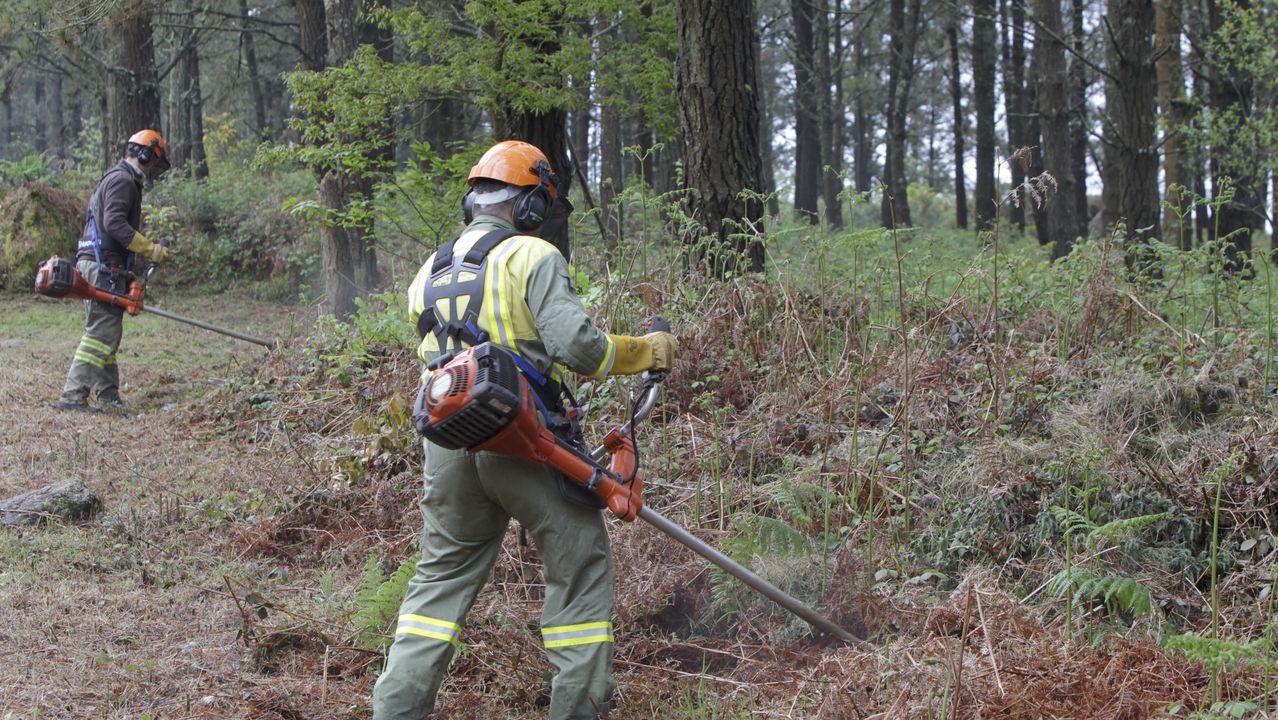 Limpieza de vegetación para prevenir incendios