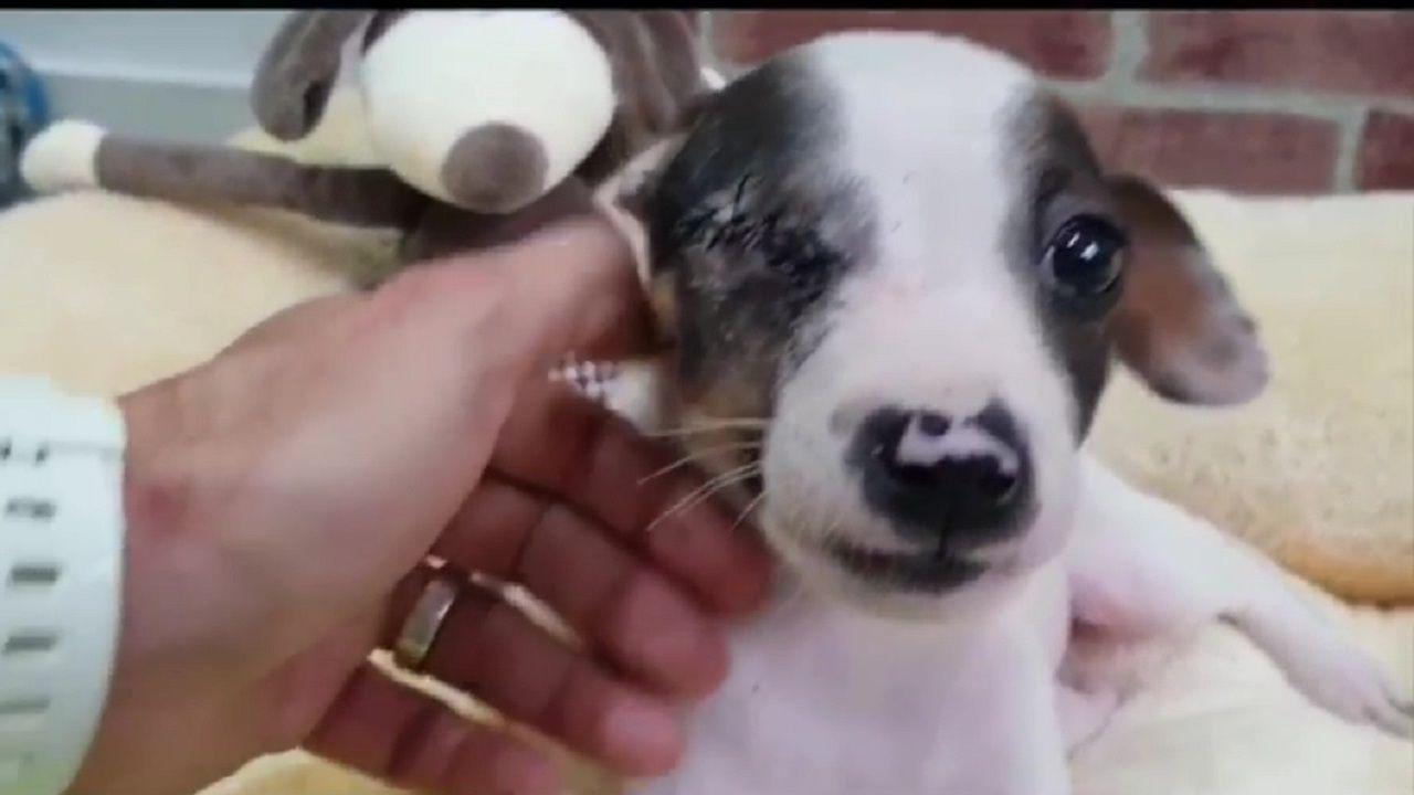 Edu, el cachorro tuerto abandonado en Vetusta