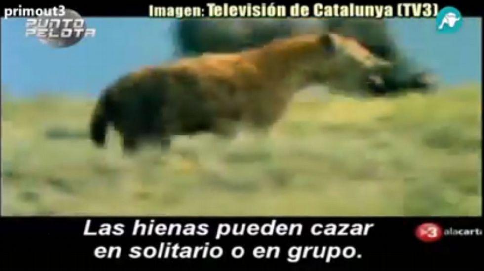 Las «hienas» del Real Madrid