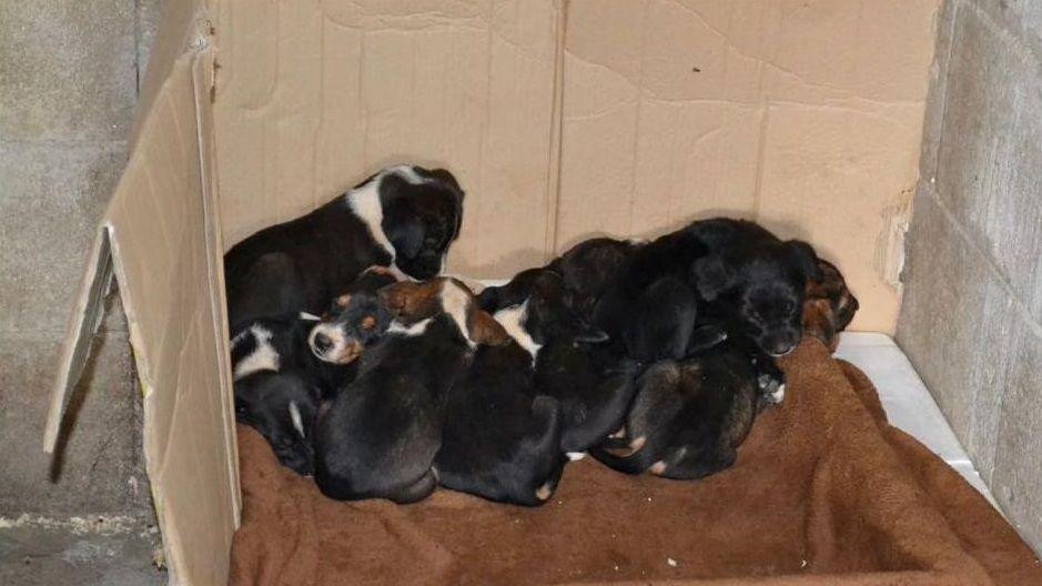 Los cachorros, ahora, ubicados en la casa de un vecino.