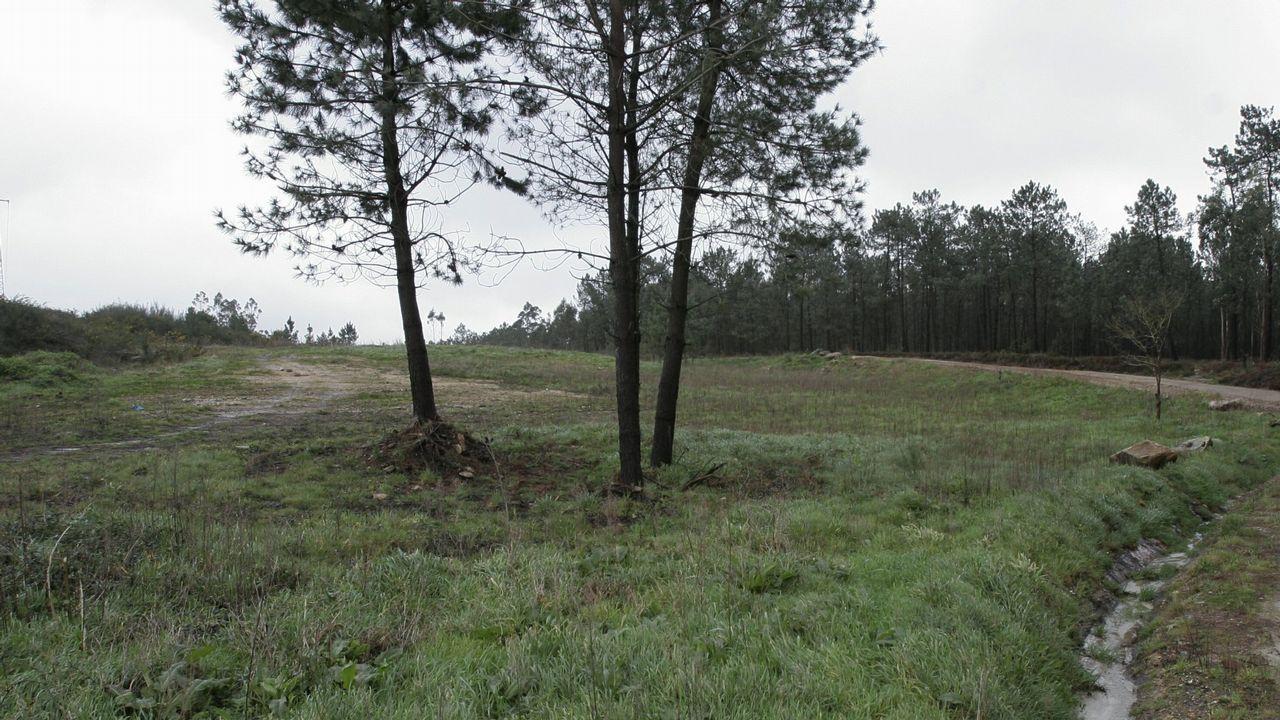 O Baixo Miño es una de las zonas de mayor producción de kiwi en toda la península