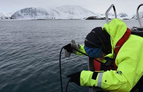 Una manada de lobos.Trabajo de campo con un hidrófono en las aguas del Mar de Barents