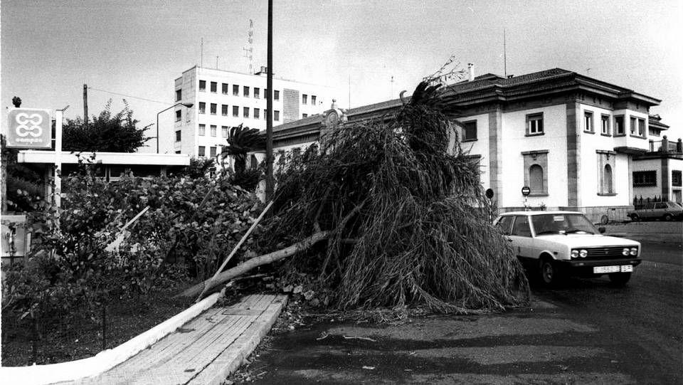 Coche aplastado por un árbol derribado en San Caetano, Santiago.