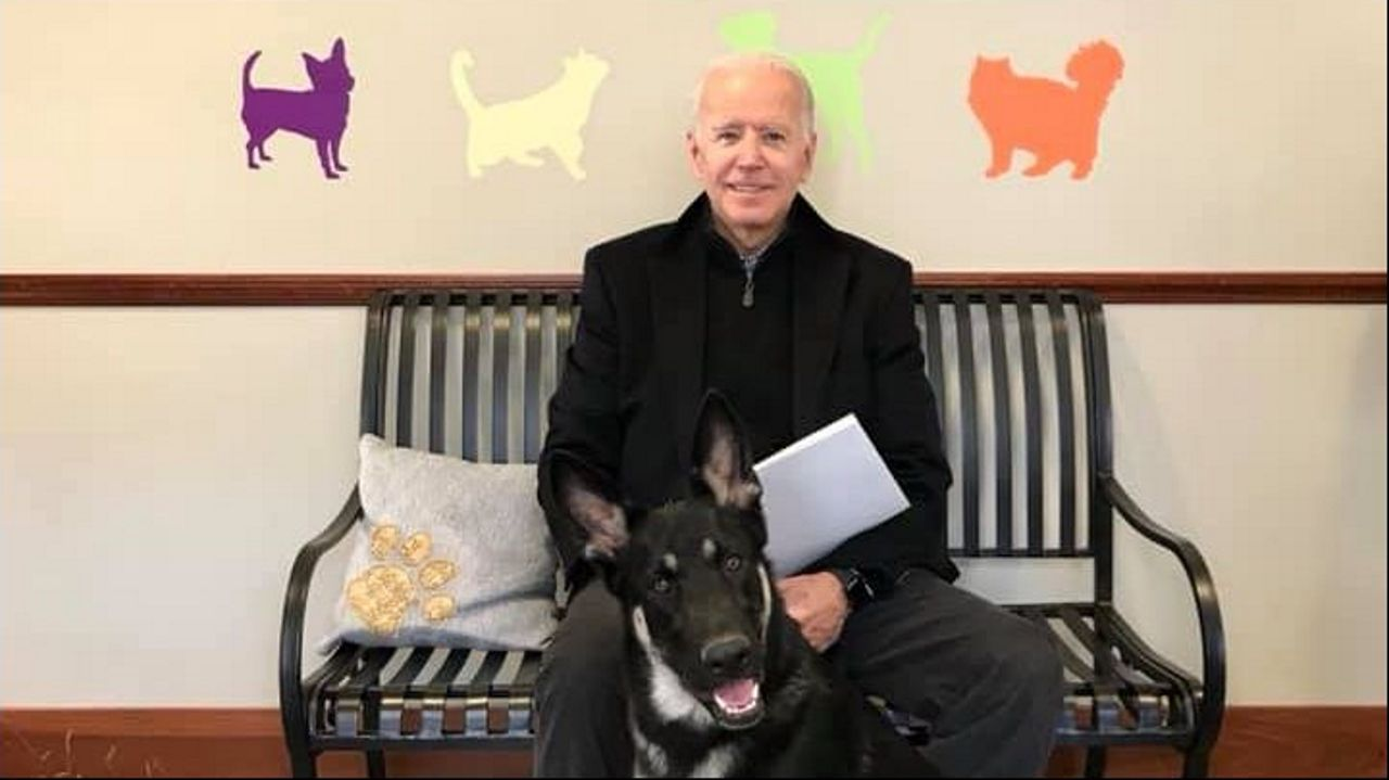 La protectora de animales de Delaware colgó en las redes una foto de Biden con el pastor alemán Major