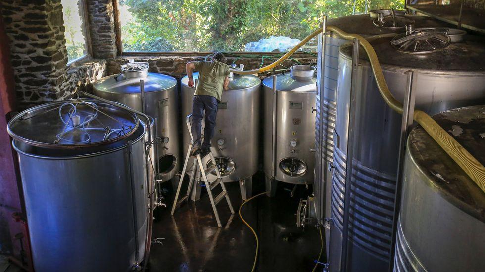 Trasiego de vino de la última cosecha en los depósitos de una bodega de Ribeira Sacra.