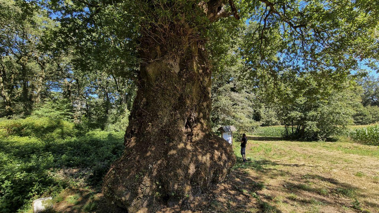 Un percorrido polas árbores senlleiras da provincia.Uno de los yates, de 52 pies, que alquila en la ría de Pontevedra la empresa Sea Galicia