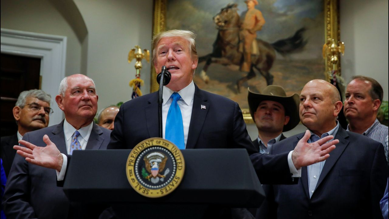 Así trabajan los resineros en Lemos.Trump presentó las ayudas en la Casa Blanca rodeado de agricultores