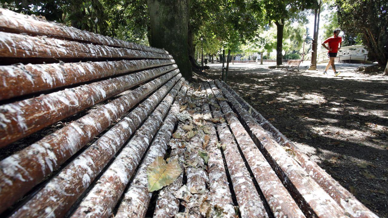 As defecacións dos estroniños tinguen de branco os bancos próximos ao estanque dos patos no parque de Rosalía