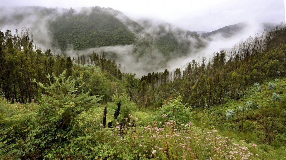 La meteorología da un giro de 180 grados en Galicia.Foto de archivo del pantano de As Forcadas, situado en Valdoviño.
