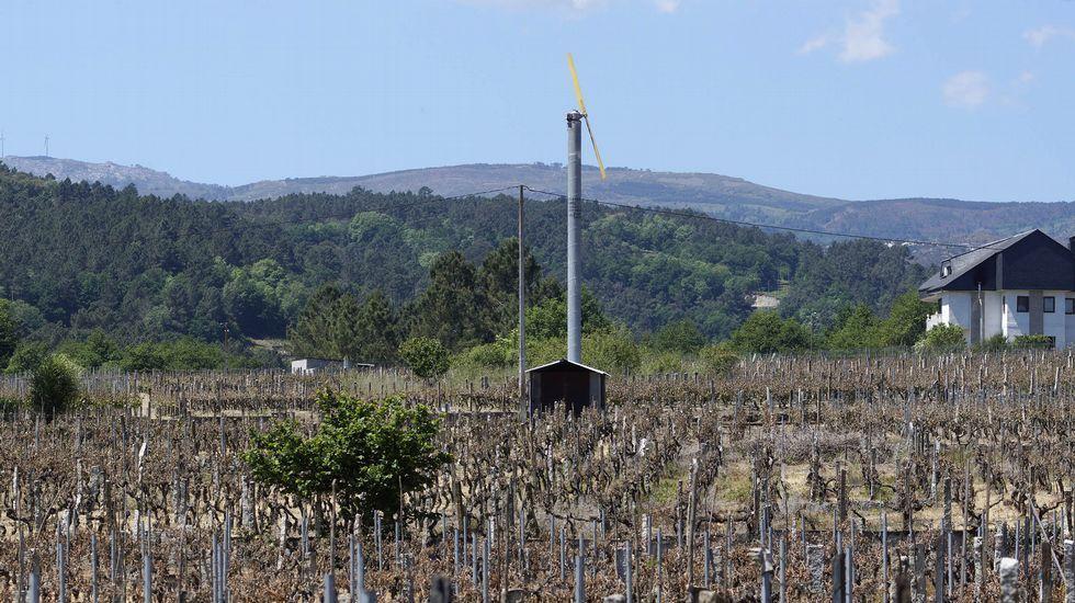 ¿Habría salvado la cosecha este ventilador gigante?