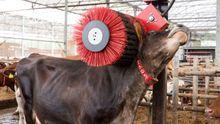 Las granjas gallegas realizaron importantes inversiones para el bienestar de las vacas