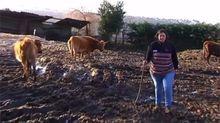 «Me obligan a matar las vacas porque soy mujer»